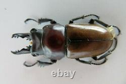 90992Lucanidae Neolucanus baongocae. Vietnam South. 39mm