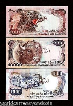 Sud-vietnam 1000 5000 10000 Dong P34 35 36 1975 Spécimen Unc Tiger Remarque Animale